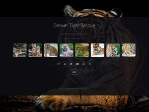 Denver Tiger Rescue Open Year Round 9am to 5pm